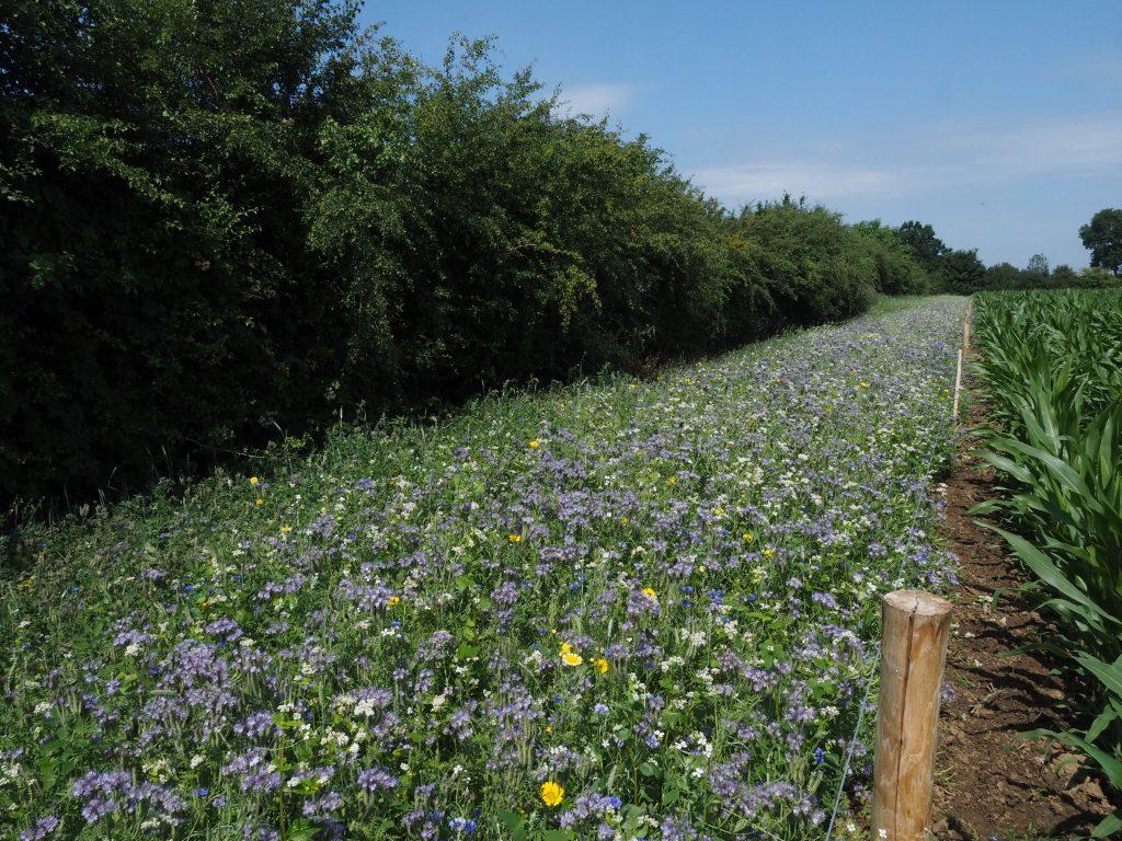 Natuurinclusieve landbouw Collectief ANB Oost-Brabant