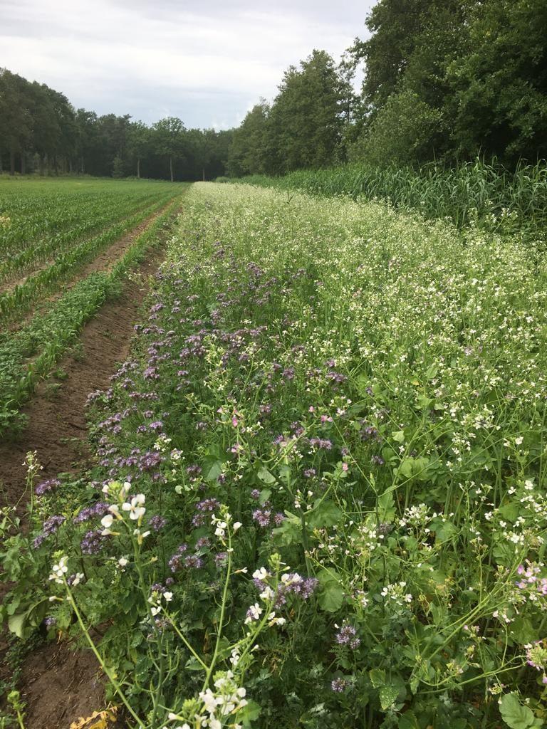Agrarisch natuurbeheer in de praktijk.