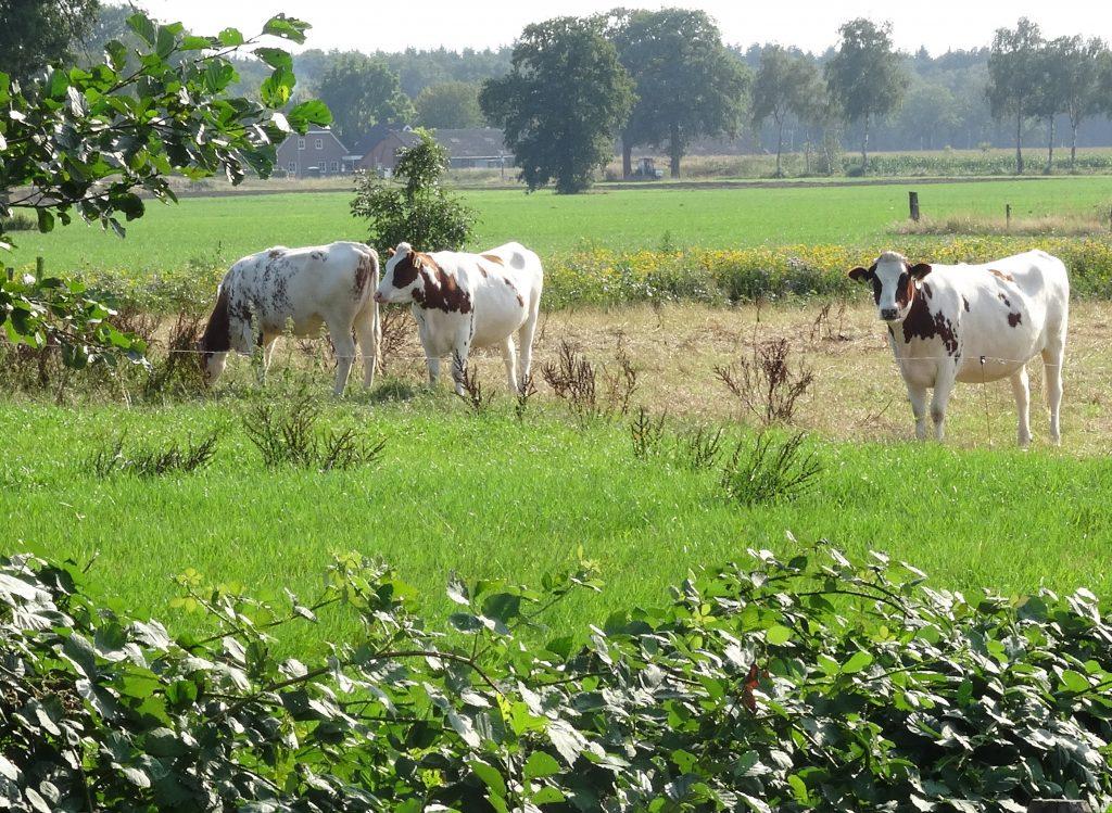 Natuurinclusieve Landbouw, ervaringen van een NiL-coach