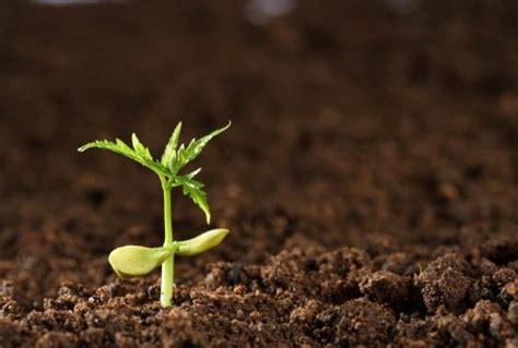 Het belang van organische stof in de bodem.
