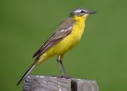 LET OP GEWIJZIGDE DATA! Uitnodiging voor een excursie weidevogels en vlinders & solitaire bijen