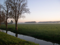 Rol van de collectieven in Brabant