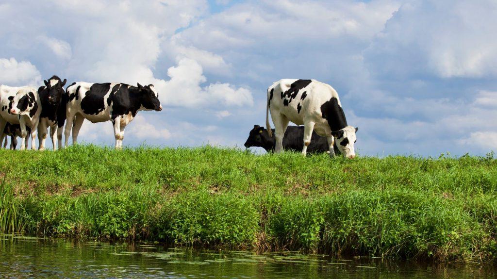 BoerenNatuur en stikstof